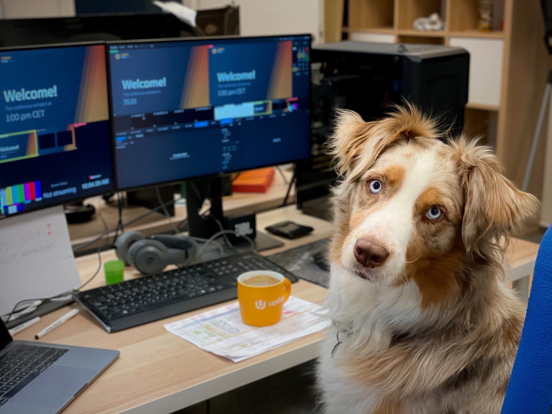 Allow coworking members to bring their pets to your space. Photo via unsplash.